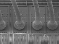 SEM Image After TotalProtect Decap